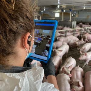 | Lady on pig farm 1 1 | VetNOW | Veterinary Telemedicine Platform for Veterinary Specialty Care | 1000 Noble Energy Drive, Suite 600 Pittsburgh, PA 15317 | https://vetnow.com/
